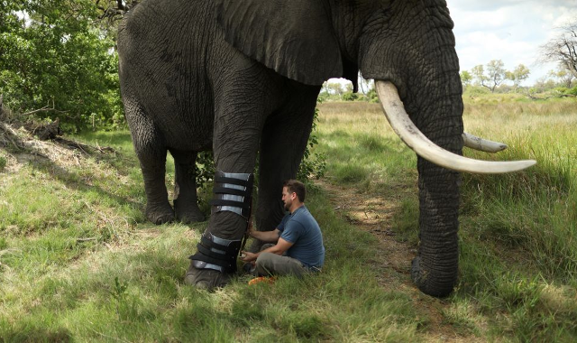 The World of Animal Prosthetics